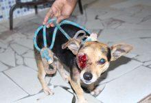 Cachorro é baleado no olho após ação da PM diz moradora