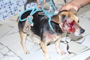 Cachorro é baleado no olho após ação da PM diz moradora2