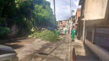 Após matéria vinculada no Portal União Notícias, Prefeitura realiza poda de árvores na Nova República