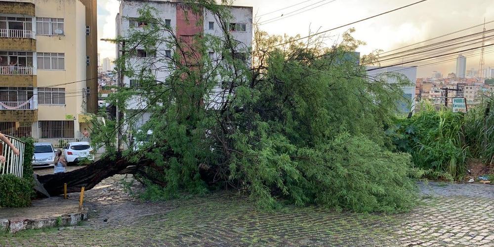 Photo of Árvore cai e atinge carros no Acupe de Brotas; moradores têm dificuldade para circular