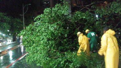 Photo of SALVADOR! Árvore cai e atinge fiação na Avenida Centenário