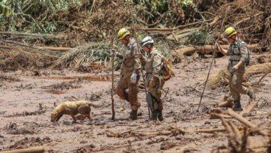 Photo of Brumadinho: cães e gatos resgatados da lama irão a feira de adoção