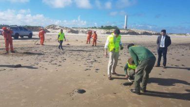 Photo of Pescadores de praias atingidas por óleo relatam queda de até 80% nas vendas