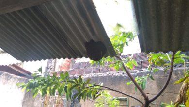 Photo of Morador da Santa Cruz pede ajuda para retirar Colmeia de Abelha do quintal