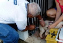 Photo of Dia D de vacinação antirrábica para cães e gatos acontece neste sábado (09); veja locais