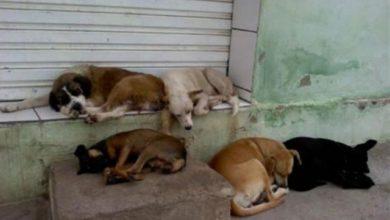 Photo of Senado deve votar projeto que proíbe sacrifício de animais de rua