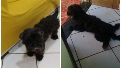 Photo of Moradora do Bairro da Santa Cruz procura por cachorro desaparecido