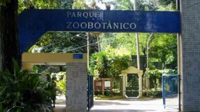 Photo of Visitas no zoológico de Salvador podem ser feitas durante a noite, através de agendamento