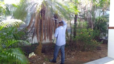 Photo of Prefeitura realiza dedetização no colégio Teodoro Sampaio para conter gafanhotos