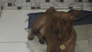 Photo of Cachorro desaparece no Bairro da Santa Cruz